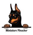 miniature pinscher - color peeking dogs - breed vector image vector image