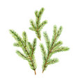 christmas set with green fir branches vector image