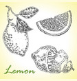 collection of highly detailed hand drawn lemone vector image