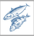fish set - sea bass mackerel vector image