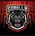gorilla head esport mascot logo desain vector image vector image