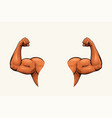 human hands biceps on white vector image vector image