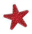 sea star animal vector image vector image
