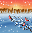 Bullfinches and winter vector image