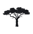 black silhouette african tree isolated image vector image vector image