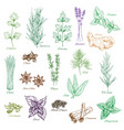 icons set of spices and herbs seasonings vector image vector image