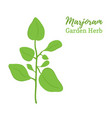 marjoram spice organic herb food vector image