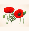 set of poppies vector image vector image