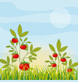 agriculture plantation vegetable vector image