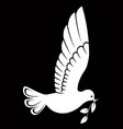 pigeon or dove white bird vector image vector image