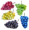red white green blue and dark blue grapes vector image