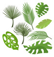 set of exotic leaves from palm trees or tropical vector image