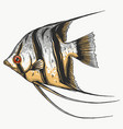 black scalar fish on white background vector image vector image