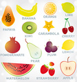 Fresh bright juicy fruits set on a white vector image vector image