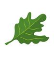 fresh rucola vegetable cartoon vector image
