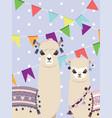 llama and alpaca greetings vector image vector image