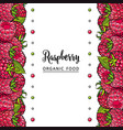 raspberry borders with fresh ripe fruits and vector image