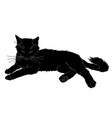 cute realistic cat laying of vector image