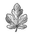 fig leaf sketch vector image