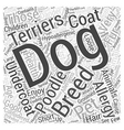 list of hypoallergenic dogs Word Cloud Concept vector image vector image