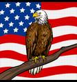 american eagle pop art style vector image vector image