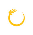 circle wheat graphic design template vector image