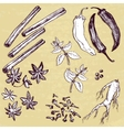 set of hand drawn spices vector image