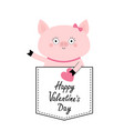 happy valentines day pig face head in pocket vector image