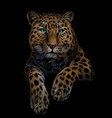 leopard jaguar color graphic artistic portrai vector image vector image