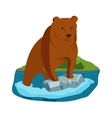 Alaska bear vector image