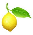 Fresh lemon with leaf vector image