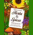 herb and spice cuisine seasonings vector image vector image