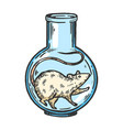rat animal in laboratory flask color sketch vector image