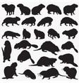 capybara beaver animal silhouettes vector image vector image