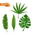 exotic tropical palm leaves set various green vector image