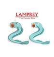 lamprey parasite fish in cartoon design vector image vector image