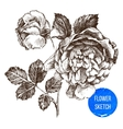 hand drawn rose flower vector image vector image