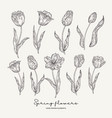 hand drawn tulips spring flowers set garden vector image vector image