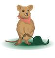 kwok kangaroo character vector image vector image