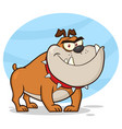 angry bulldog dog cartoon mascot character vector image