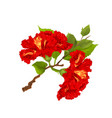 hibiscus red branch tropical flowers vector image vector image