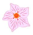 mandevilla flower vector image vector image