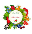 poster of wild berries and ruits vector image vector image