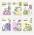 six package templates for herbal tea or natural vector image