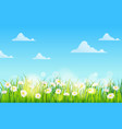 spring field flowers daisies chamomile and vector image vector image