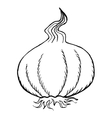 bulb of garlic vector image vector image