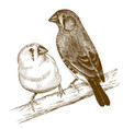 engraving two japanese finches vector image