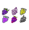 grape design icons vector image vector image
