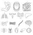 internal organs of a human outline icons in set vector image vector image