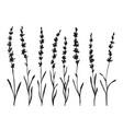 set of hand drawn lavander flower silhouette vector image